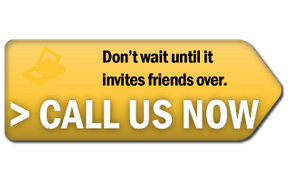 Don't wait until it invites friends over. Call us now.